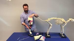 how to fit a dog knee brace aoc pet
