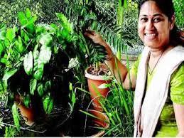 create your own organic kitchen garden