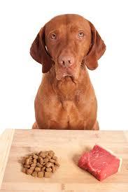 Raw diet or kibbles stock image. Image of kibbles, golden - 29013381