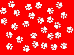 paw print wallpapers top free paw