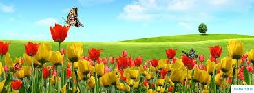 Tło na Facebooka Tapeta tulipany na łące