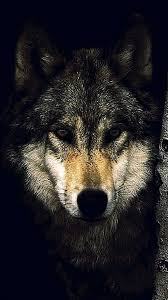 iphone 6s plus wolf wallpapers wolf