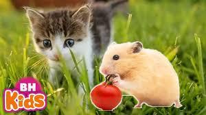 Con Mèo Con Chuột, Con Heo Đất - Nhạc Thiếu Nhi Con Vật Vui Nhộn Cho Bé Mầm  Non - YouTube