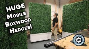 Making 5 Huge Boxwood Hedges Youtube
