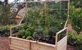 vegetable garden planning for beginners