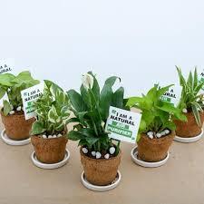 eco friendly coir pot gift pack