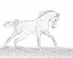 Kleurplaten Paarden Dingen