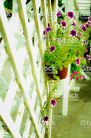 Outdoor Flower Pot Hanging On Wooden Fence For Small Garden Stock Photo Download Image Now Istock