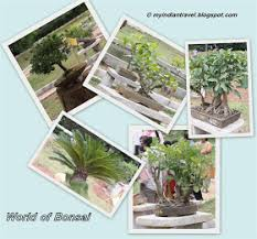 lalbagh gardens bonsai