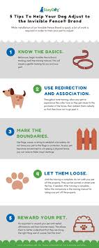 5 Tips To Help Your Dog Adjust To The Invisible Fence The Pet Blog Lady Celebrating Our Pets