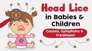 head lice in infants children