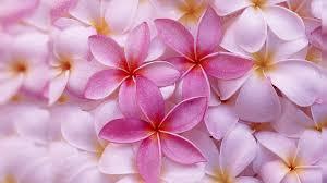 most beautiful flower wallpapers best