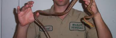 Snake Repellent And San Diego Snake Removal