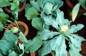 guide to urban kitchen gardening