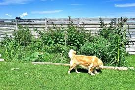 How To Keep Dogs Out Of Garden Gardening Tips Advice