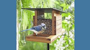 bird feeder plans and step by step