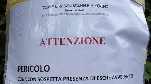 San Michele di Serino, cani avvelenati nel giorno della celebrazione dei  Morti