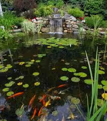 i clean my pond