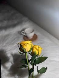Yellow أصفر On Twitter أحببت روحا تزرع ورد أصفر في قلبي