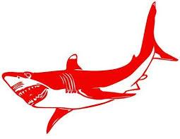 Amazon Com Great White Shark Decal Sticker Red Mirrored Decal Sticker Vinyl Car Home Truck Window Laptop Kitchen Dining