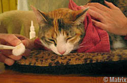 homemade cat food for sensitive stomach