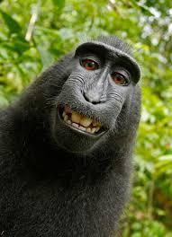 funny monkey blank template flip