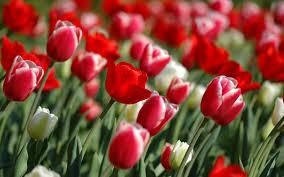 زهور رائعة الجمال اجمل ورود فصول السنة اروع روعه