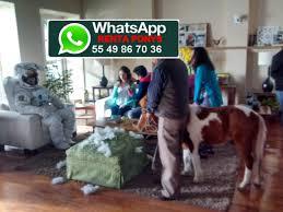 renta de ponys para fiestas – LIENZO CHARRO DE CONSTITUYENTES