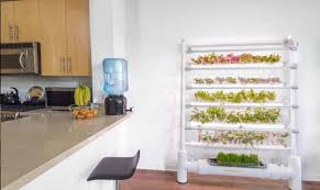 automated hydroponic gardens help you