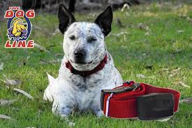 Electric Dog Shock Collars How They Work Feel On Dogs