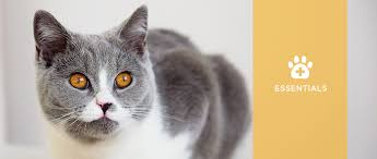 cats with chronic kidney disease