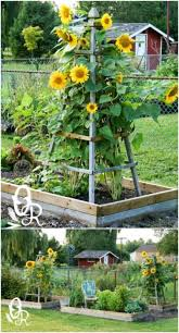 12 easy diy trellis ideas to add charm