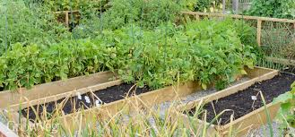 raised beds essential or too expensive