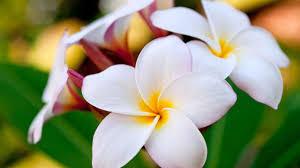 صور ازهار طبيعية اجمل و احلي صور ازهار طبيعيه المنام