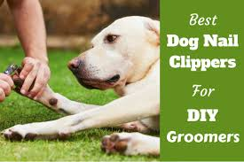 best dog nail clippers for diy groomers