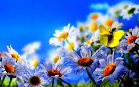 spring flowers background desktop 66