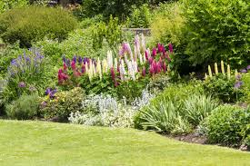 garden border planting ideas for uk