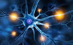 Santé : 6 astuces pour aider le cerveau à générer de nouveaux neurones