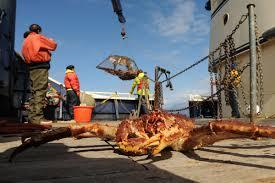 Despite concerns, Bristol Bay fishermen reach king crab quota in a jiffy ...