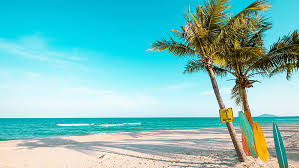hd wallpaper palm sandy beach