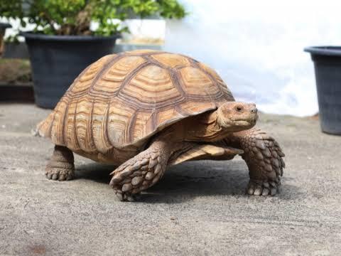 Explore The History of Tortoises