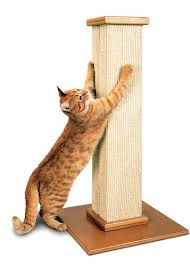 scratching post for your cat