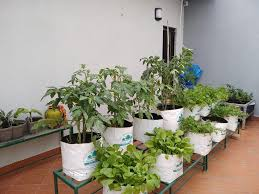 plant grow bags types uses for