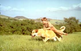 Kevin Corcoran Dead: 'Old Yeller' Actor Was 66 | Hollywood Reporter