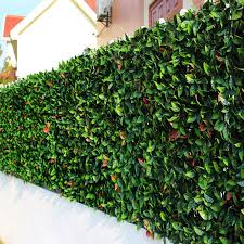 China Topiary Plastic Green Boxwood Leaf Fence Artificial Hedge China Artificial Hedge And Artificial Plant Price