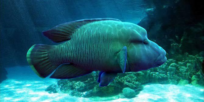 Bikin Panas Dingin, Berikut Pesona Tersembunyi Laut Natuna yang Ingin Diklaim China!