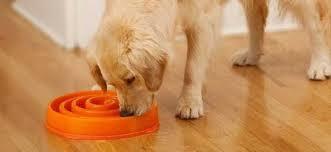 Ciotole per cani voraci: Funzionano realmente? Recensione delle ...