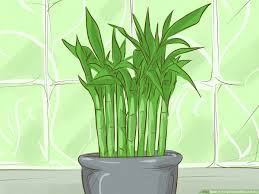 easy ways to hang plants without holes
