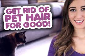 get rid of pet hair for good clean
