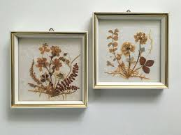 Vintage DINA West Germany Dried Pressed Flowers in Gold Trim White Frames  Set/2 | Dried and pressed flowers, Frame set, Pressed flowers